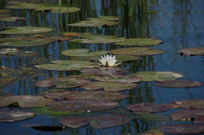pescuit la stiuca si biban pe lacul gorgovat din delta
