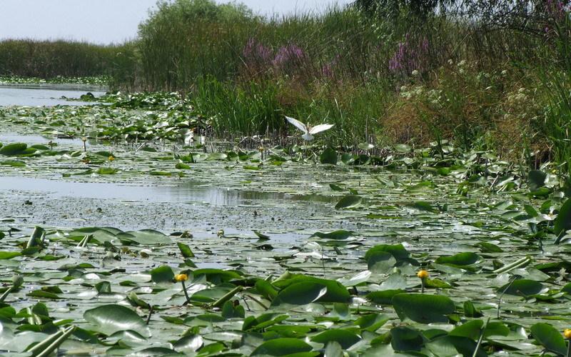 pescuit la stiuca si biban pe lacul alb in delta
