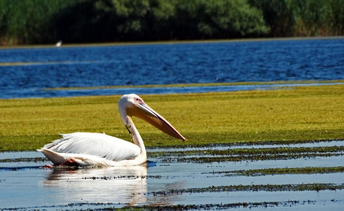 pescuit la stiuca pe lacul baclanesti mari din delta