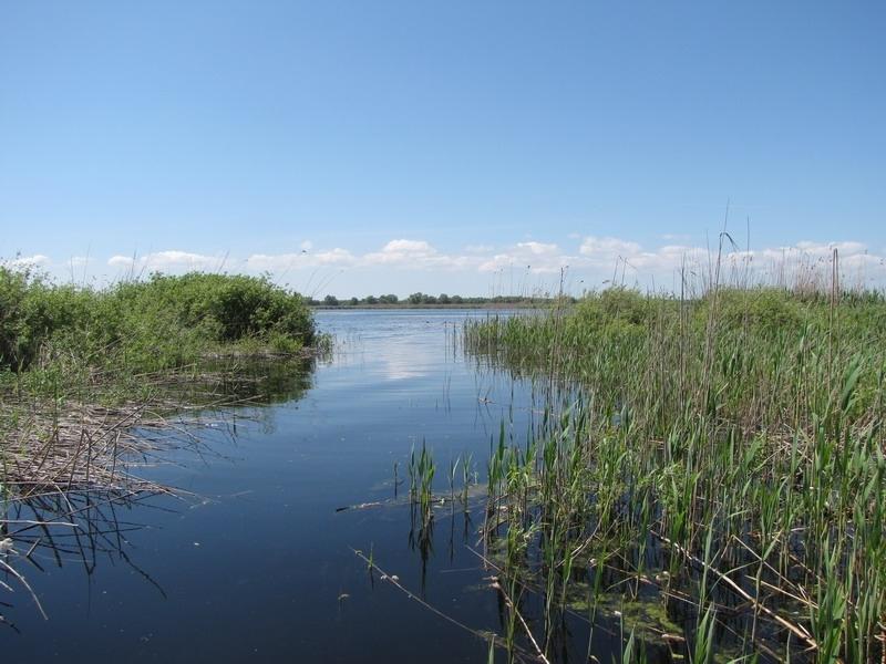 pescuit la stiuca si avat pe lacul gorgova din delta