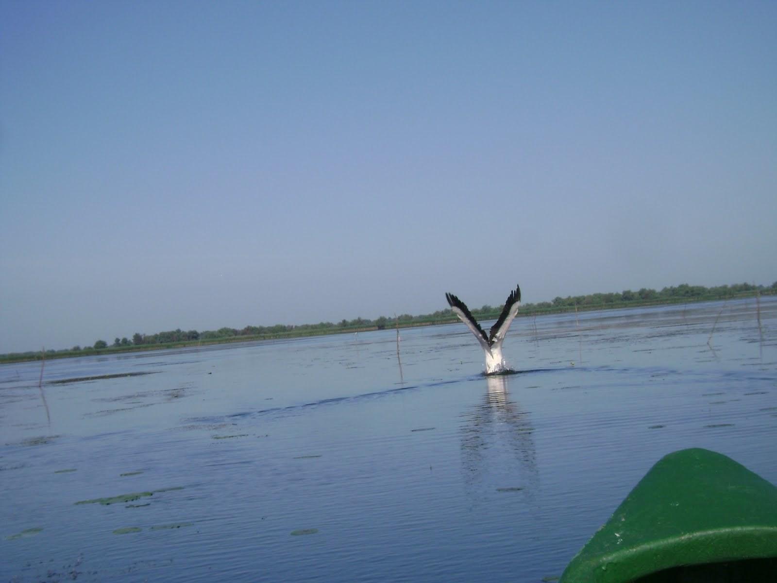 pescuit pe lacul ligheanca in delta