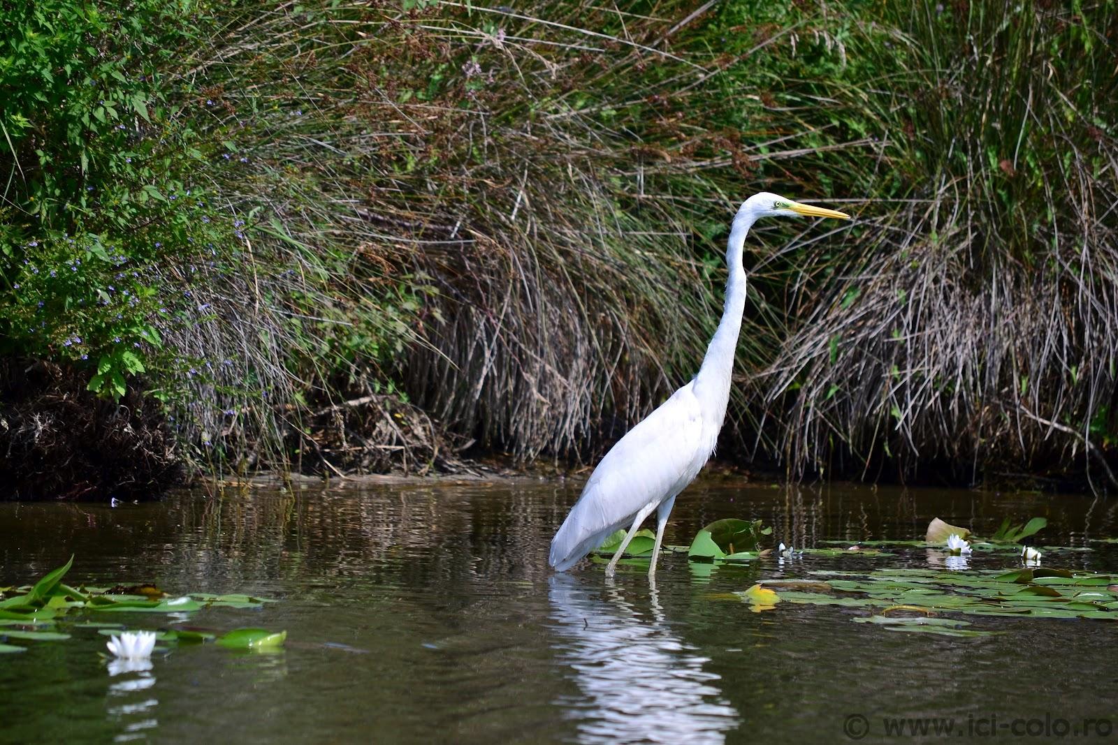 pescuit la stiuca pe lacul rosulet in delta