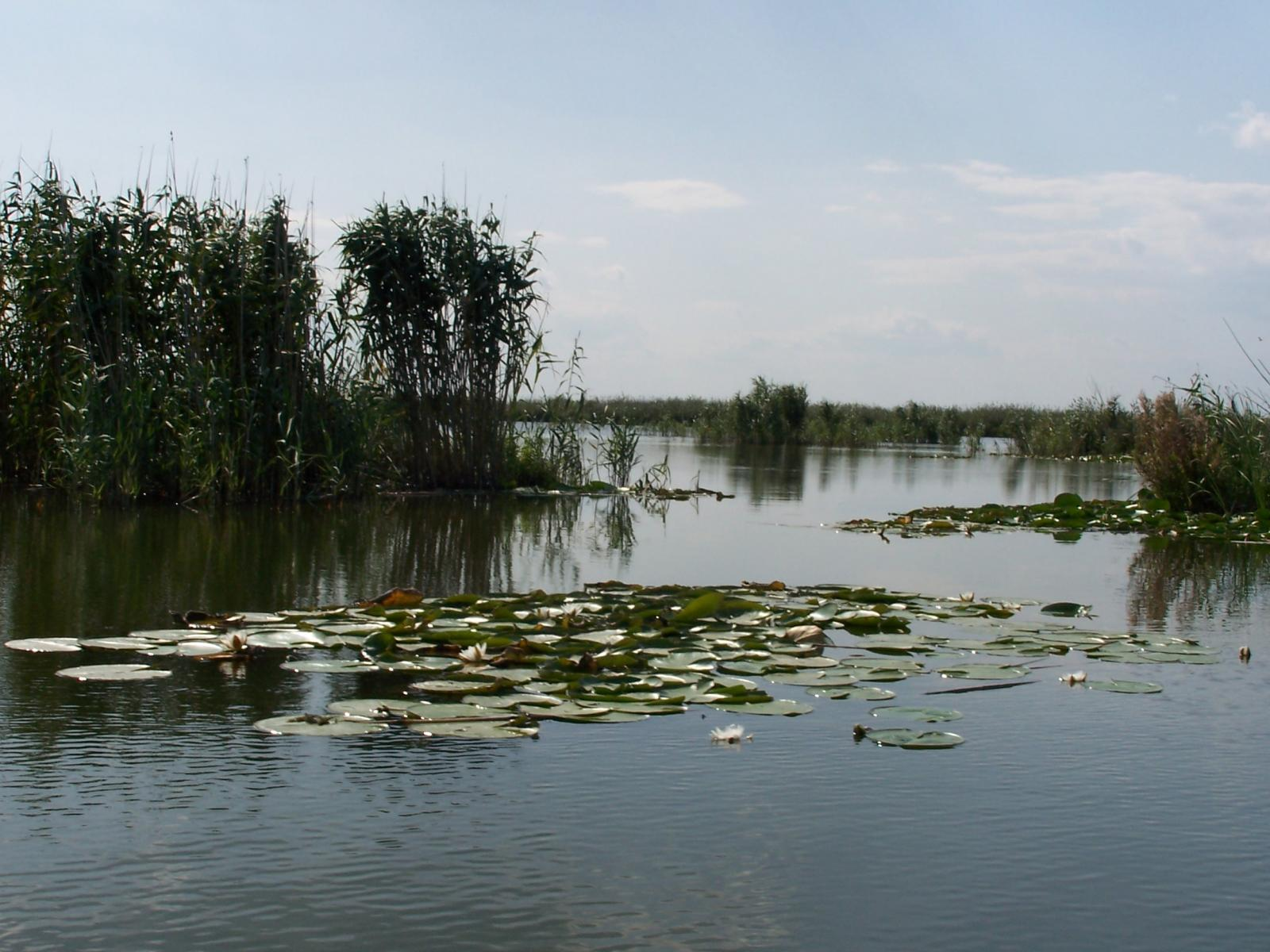pescuit pe lacul tataru in delta