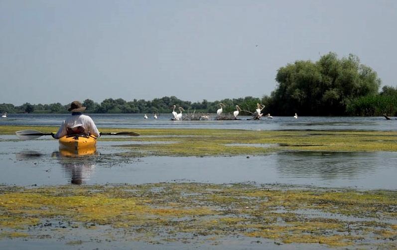 plimbare pe lacul vacaru cu catamaranul