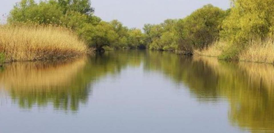pescuit la biban pe canalul lopatna delta