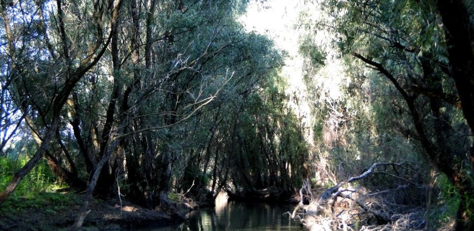pescuit pe canalul trofilca