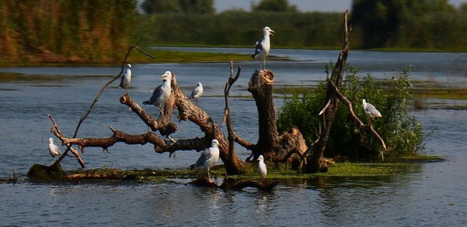 pescuit la biban pe lacul trei iezere delta
