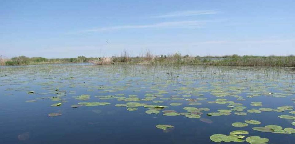 pescuit la sstiuca si biban pe lacul isac din delta