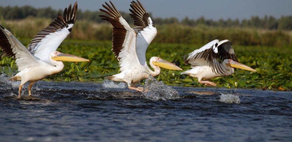 pescuit la stiuca pe lacul isacel din delta