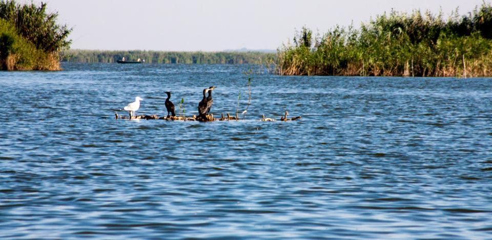 pescuit la biban pe lacul tataru din delta