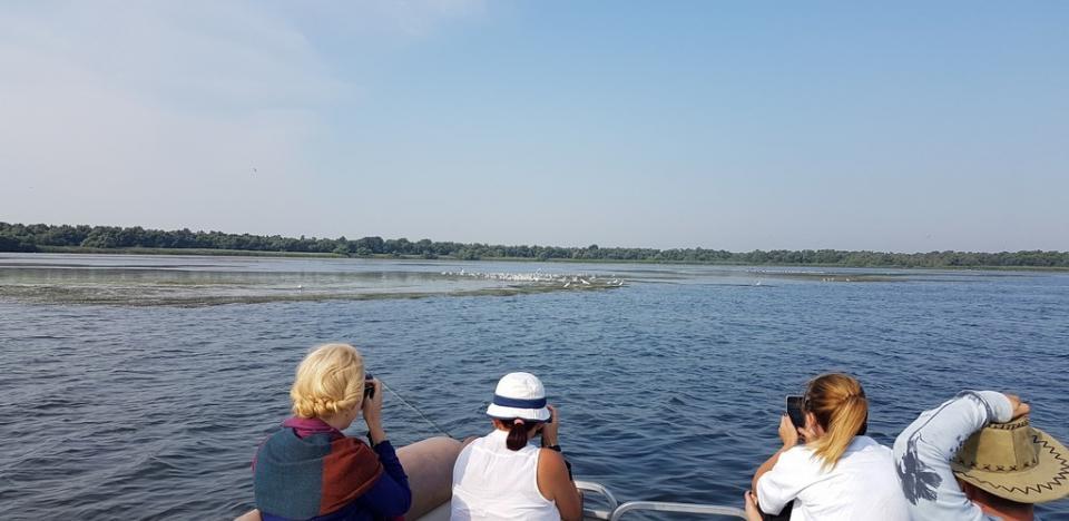 turisti admirand pelicani din delta dunarii