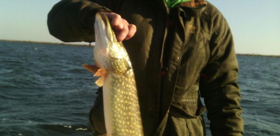 pescuit la stiuca in Delta pe hoteluri plutitoare