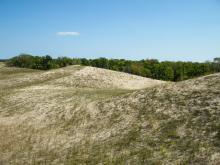 Vizitarea pădurilor din Delta Dunării